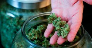 Etude sur les jeunes et le cannabis