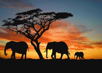 Plan Your African Safari Trip