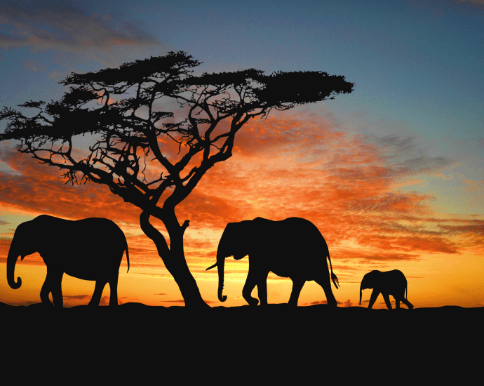 Plan Your African Safari Trip