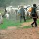 'Declare herdsmen attacks as terrorist acts,' SERAP urges UN Security Council