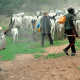 Fulani shouldn't be asked to leave south, says ex-security adviser