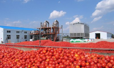 NARICT to set up tomato processing plants in northern states – Ag. D-G