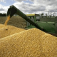 Glut threatens Nigeria's 600,000 tons wheat production