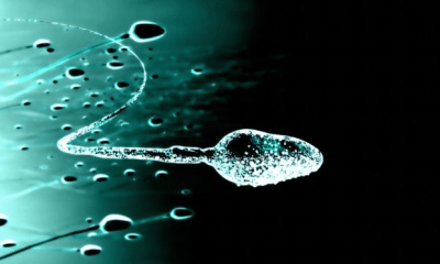 New sperm storage technique raises hope for infertile couples