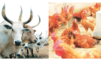 Livestock imports ban as elixir to conserving forex