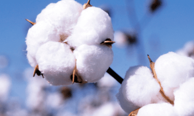 Restructuring of cotton industry lauded