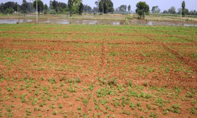 Developer slashes land price by half