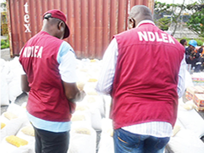 NDLEA destroys 40 hectares of Indian hemp plantation in Ibadan - New Telegraph Newspaper