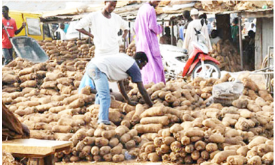 Nigeria's yam export: Rejection in Europe, America stalls shipments