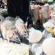 LASSA Fever epidermic, blessing to us–Rat poison sellers