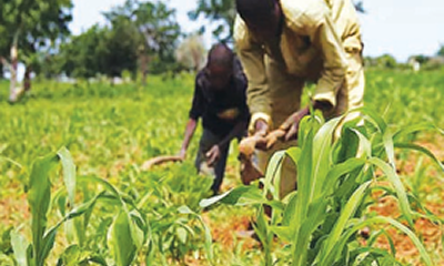 Youths tasked to embrace, invest in modern agric