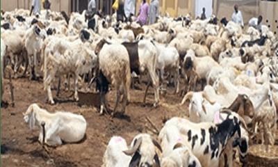 In Lagos, buying of rams has gone digital