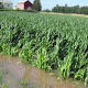 Flood: Nigeria's agriculture in stormy petrel