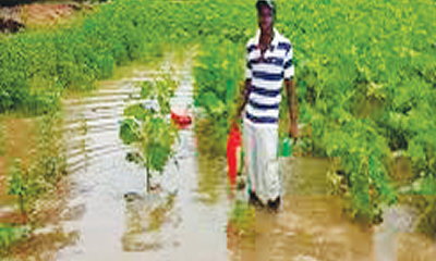 Floods: Need for Nigeria farmers to embrace insurance