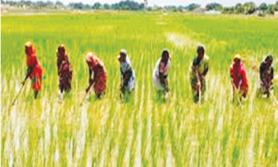FEPSAN applauds FG's NPK fertiliser importation ban