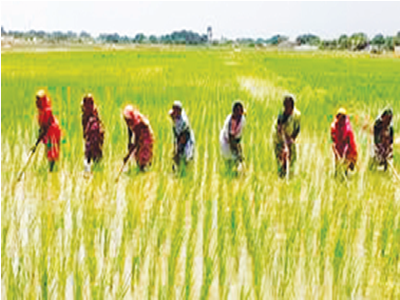 Comparing Nigeria's rice policy with US report