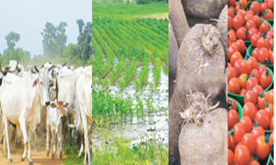 Ruga controversy, others worsen Nigeria's agriculture woes
