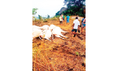 Ijare, community where lightning struck 36 cows dead on 'Sacred Hill'