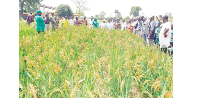 CBN: Agricultural commodities speculators will get their fingers burned