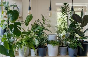 Top 14 Houseplants To Start With For the Beginners