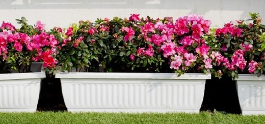 Types of Garden Pots- Its pros, cons, and handling tips