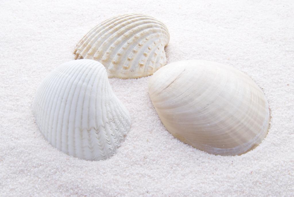貝殼(軟體動物外套膜):讀音,含義,簡介,種類,學術用途,商業用途,工藝品,飾品類_中文百科全書
