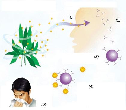 組織胺:概述.功能.產品由來.案例.原因.治療預防.組織胺球蛋白.抗組織胺藥品.用_中文百科全書