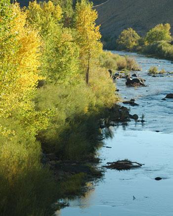 Fall along the Carson River
