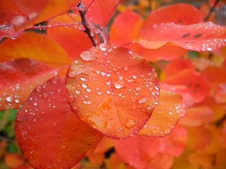 Rain drops on fall color leaves.