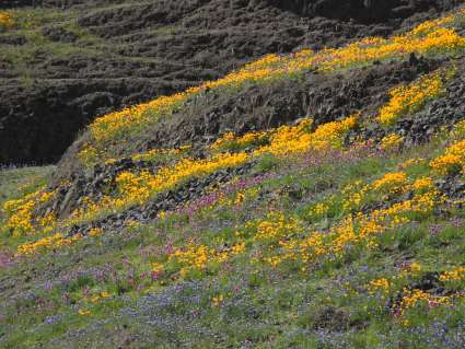 North Table Mountain Ecological Reserve near Oroville, CA