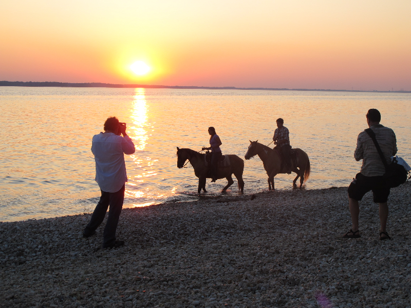 Horses enjoying a sunset on the beach for the Kentucky Visitor's Guide photo shoot