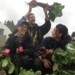 Community Supported Agriculture (CSA): A Partnership Between Farmers and Community