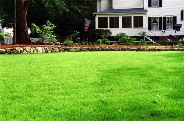 yard landscaping lawns yards