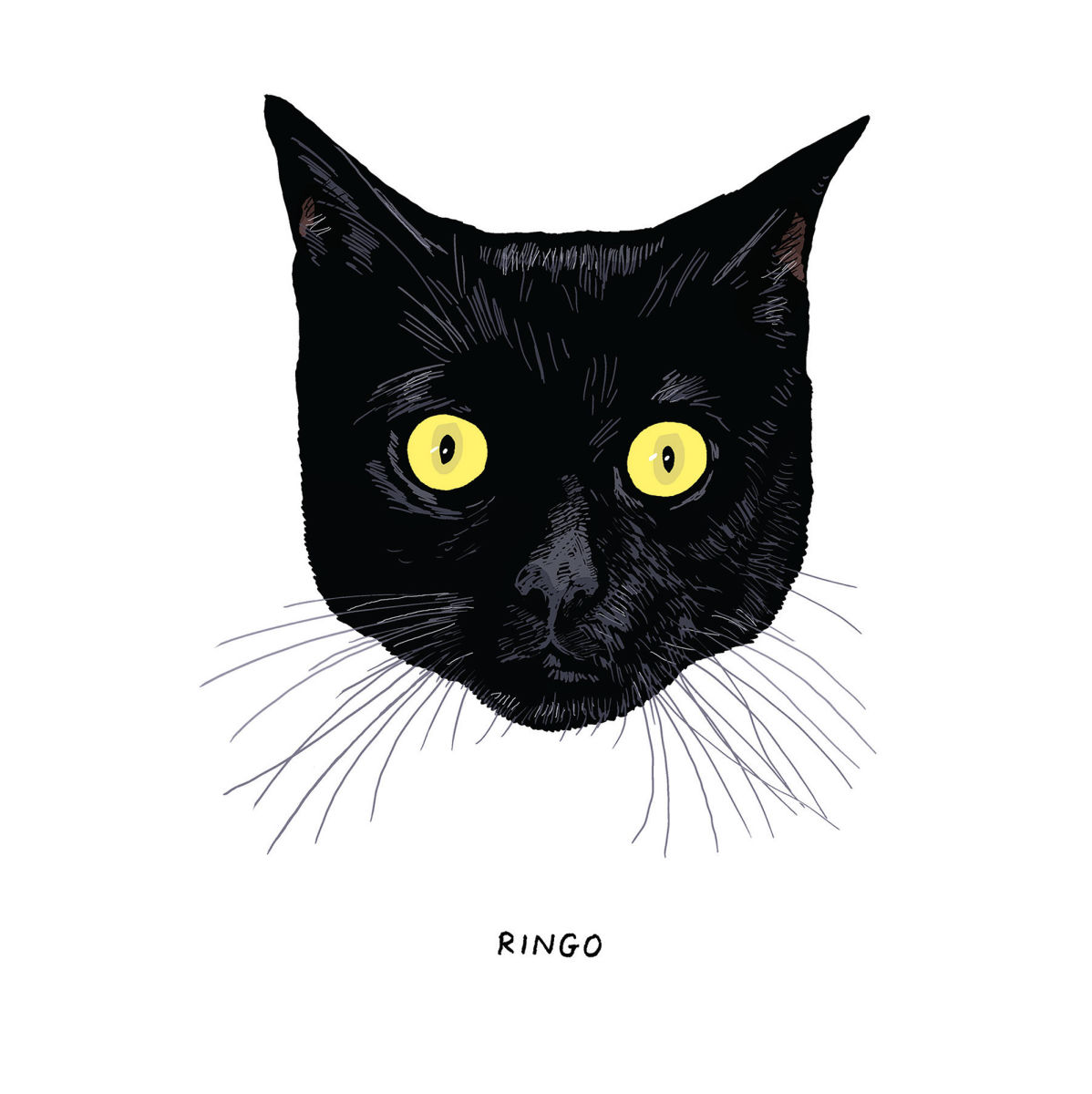 All Black Cats Are Not Alike The New Yorker