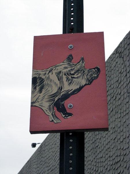 Pig closeup