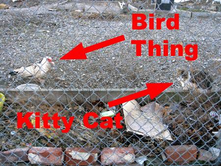Bird Thing and Kitty Cat