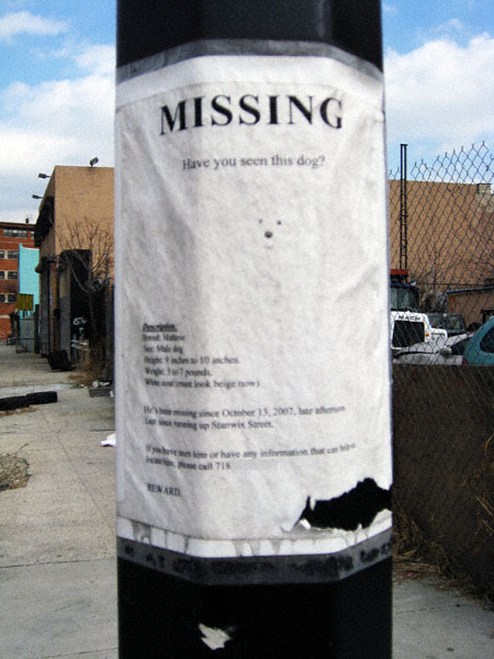 Missing on Melrose Street