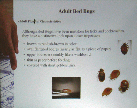Notes From The Bedbug Workshop Newyorkshitty Com