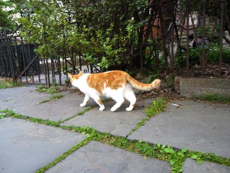 orangeandwhite