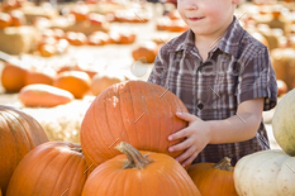Adorable Little Boy Gathering His Pumpkins at a Pumpkin Patch on a Fall Day.
