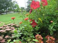 This blog for you: Pictures of landscaping queens new york