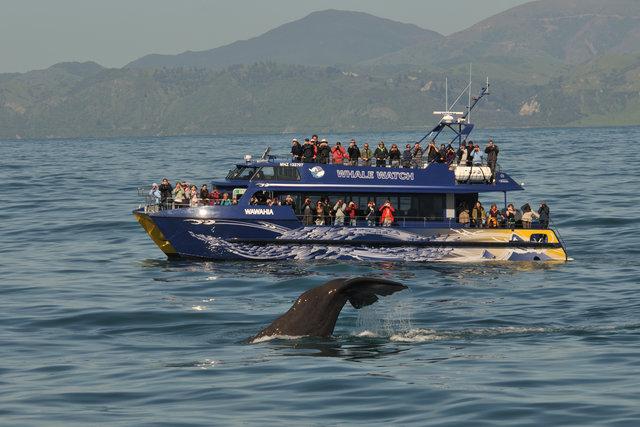 Whale Watch Kaikoura Ltd Activities Tours In