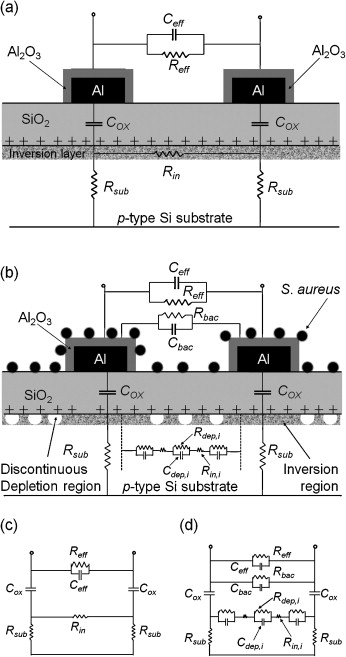 A new interdigitated array microelectrode-oxide-silicon