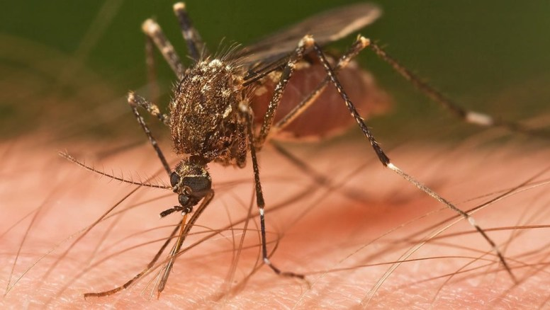 Yellow Fever Outbreak; No Need to Panic – Dr. Akase