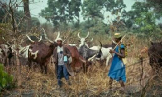 Eleme Attack: Regulate Activities of Herdsmen – MOSOP Tells Rivers CP