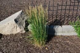Karl Forester Grass