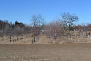 Nursery Trees Winter
