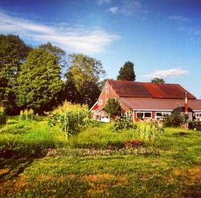 Nezinscot Farm Summer