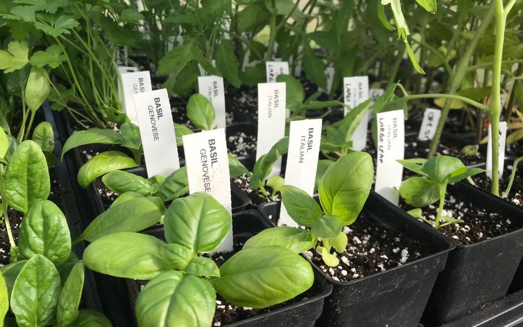Gardening 101 | Plants & Seedlings Available