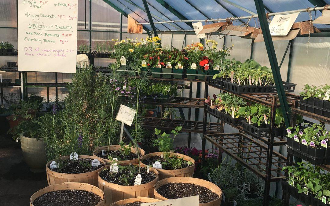 Gardening 101 | Picking & Preparing Stinging Nettles